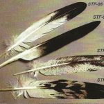 Eagle Feathers – STF – 02/05/06/09