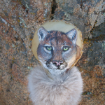 The Mountain Lion Rattle